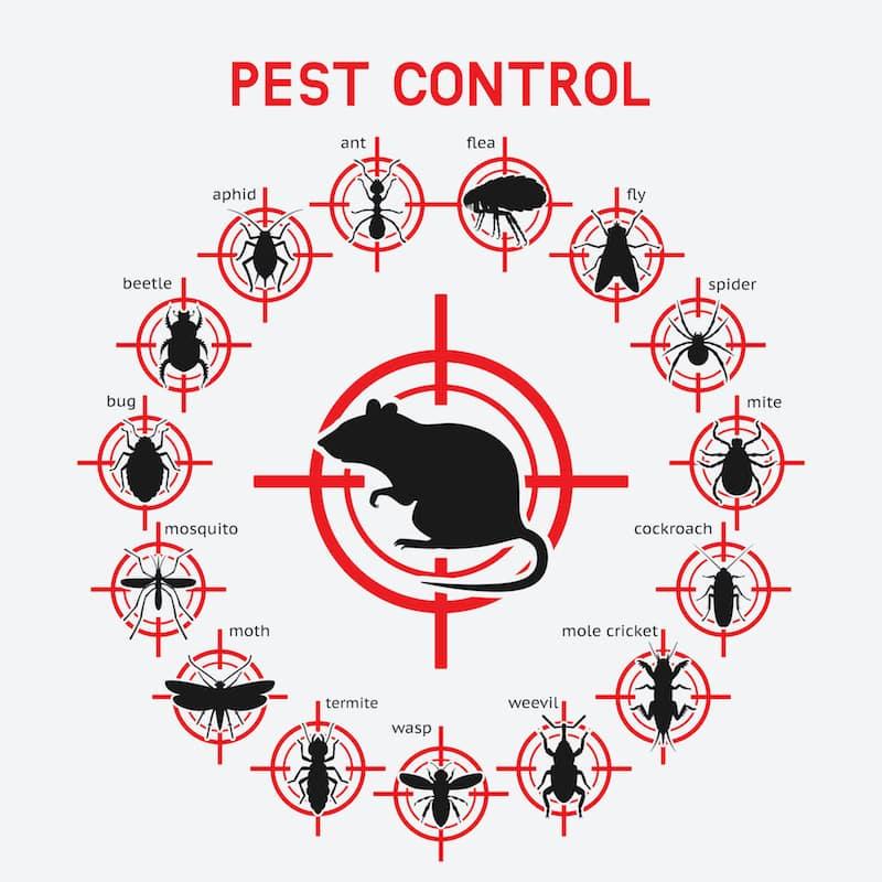 Squished Pest Control & Termite Management