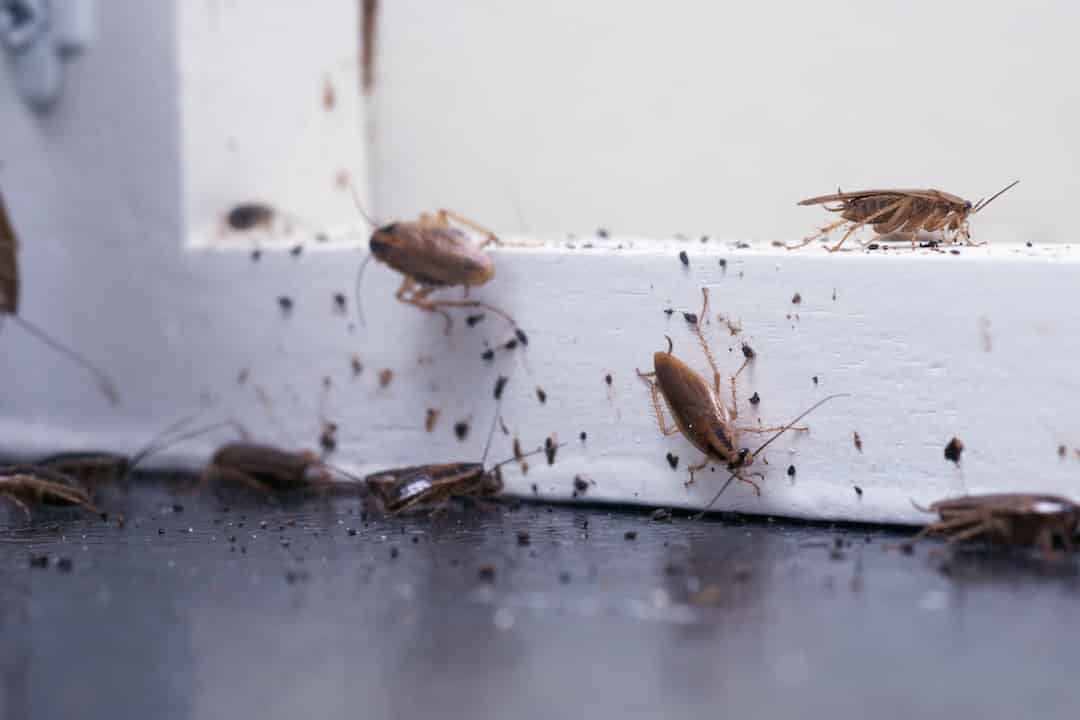 Commercial exterminator - Commercial Pest Control that works